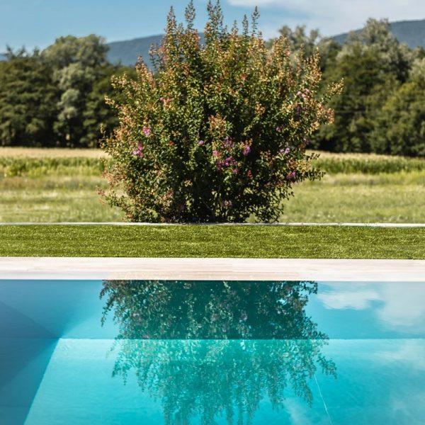 reflet d'une plante dans l'eau de la piscine