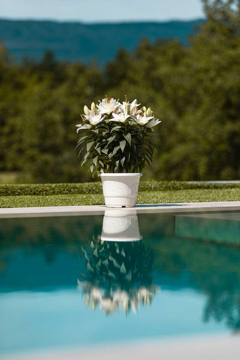 reflet d'une fleur dans l'eau de la piscine talya