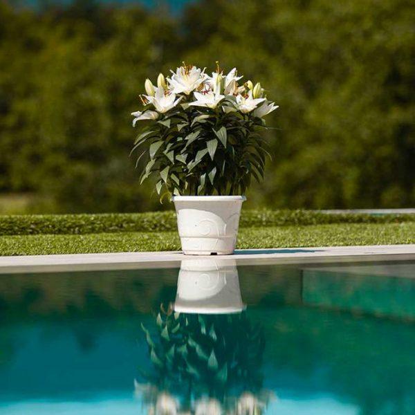 Reflet de fleurs dans l'eau de la piscine miroir en inox Talya